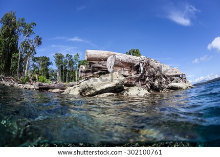 Logs lie on the edge of an island in the Solomon Islands. Logging and clear cutting is a problem for coral reefs due to the sediment that often runs off the land and covers nearby marine habitats.