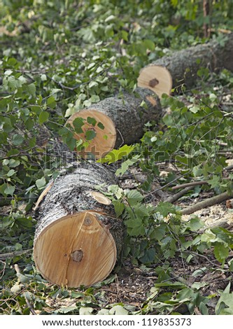 Logs of a sawed down tree laying on the ground