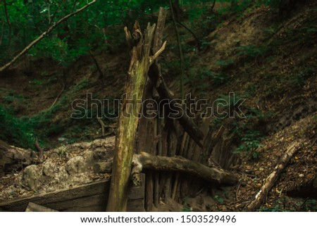 logs of dead dry trees piled in a pile. forest plants in the summer. wildlife landscape.