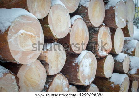 logs piled in piles are under the snow