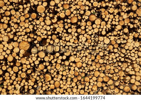 Logs piled up in a massiv pile awaiting transformation to building materials or energy source