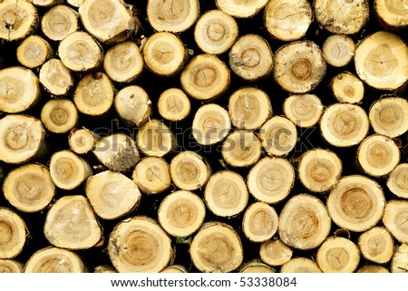 Logs stacked after trees have been felled