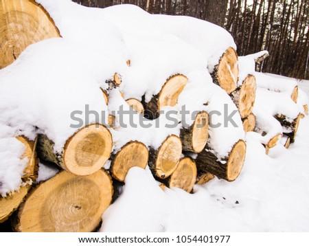 logs under the snow