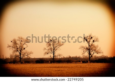 Lomofied picture of three bare trees