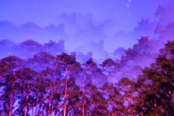Lomography magic landscape. Pines and sky. Abstract blurry psychedelic background. Soft focus.
