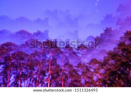 Lomography magic landscape. Pines and sky. Abstract blurry psychedelic background. Soft focus. Photo stock ©