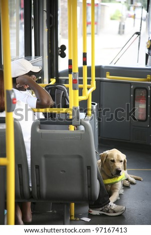 LONDON - AUG 09: A guide dog, trained to lead blind, on a local bus on Aug 09, 2010, London, UK. In some countries, guide dogs allowed being in places such as restaurants and public transportation.