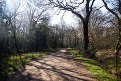 London, UK - March 26th 2020:  Emptied Forest and People getting their daily exercise during Covid 19 and UK Lockdown, Epping Forest , England.