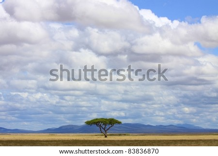 Lone Acacia tree in the middle of a beautiful expanse of savanna plain, Amboseli National Park, Kenya