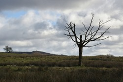 Lone bare tree on field against cloudy sky