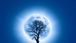 Lone dead tree with super full blue Moon -