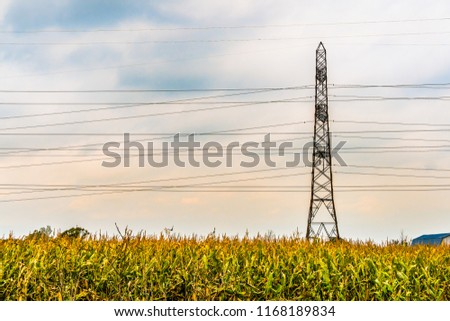 Lone electricity tower with powerlines,  in an agriculture field of corn in the autumn. #1168189834