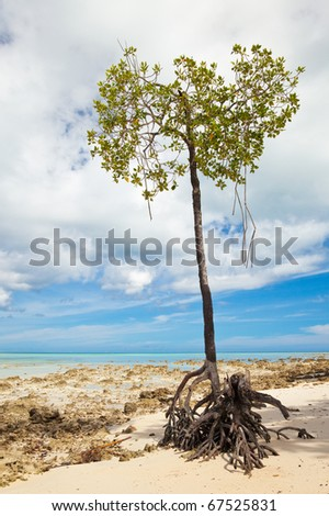 Lone mangrove tree at Vijaynagar Beach on Havelock Island, Andaman Islands, India.