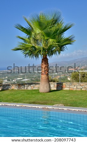 Lone palm on a summer vacation - Palm tree by the pool with the Cretan mountains in the background in Malia, Crete near Heraklion