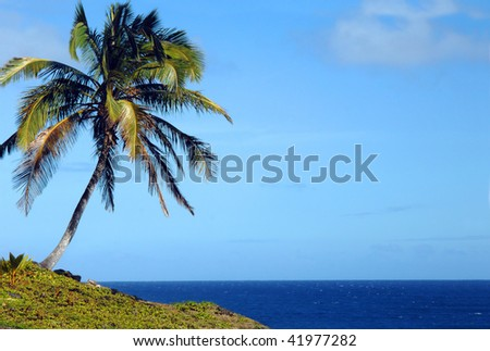 Lone palm tree bends toward the azure waters of the Pacific Ocean off the shores of the Big Island of Hawaii.