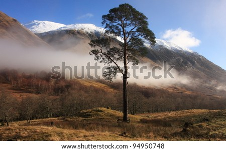 Lone Scots Pine tree in Glen Nevis with Ben Nevis,highest mountain in the UK in the background.