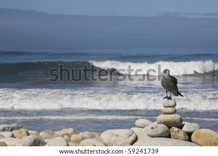 Lone Seagull sitting on boulders beside the ocean