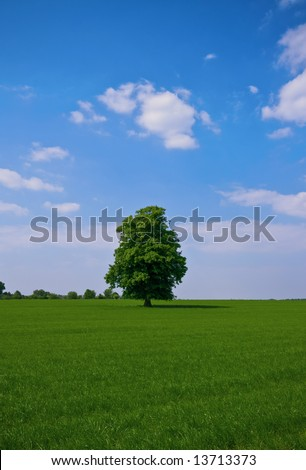 lone some standing tree in a pasture and fluffy clouds - stock photo