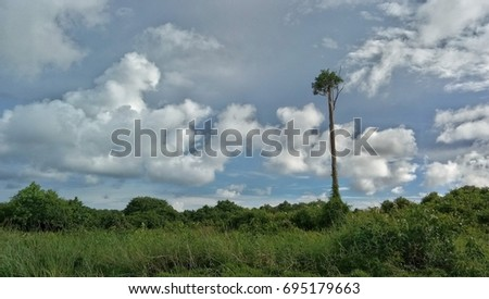 Stock Photo lone tree against bright blue sky