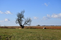 Lone tree and a hay bale in a field