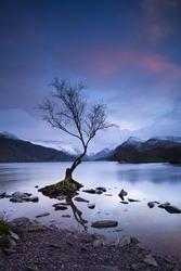Lone tree at Llanberis