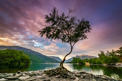 Lone Tree at Llyn Padarn, Llanberis, Snowdonia, North Wales With The Sunrising