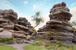 Lone tree between rock formations at Brimham Rocks, Yorkshire Dales, England