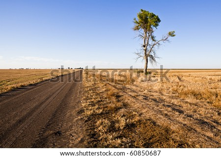 Lone tree grows along a dirt farm road on the plains of Western Kansas