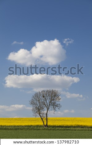 Lone tree in a field in Summer in Cambridgeshire,East Anglia, UK