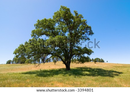 Lone tree in grassy meadow