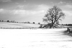 Lone Tree in the winter