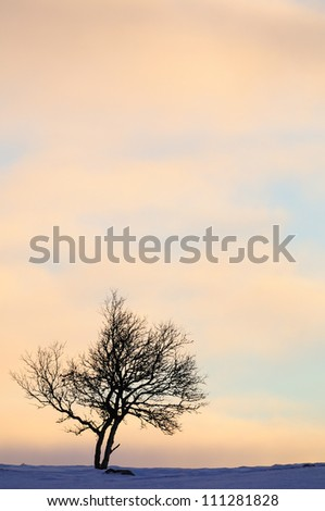 Lone tree in winter - stock photo