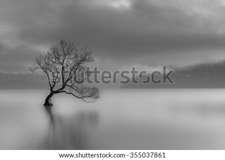 lone tree  lake wanaka  new...