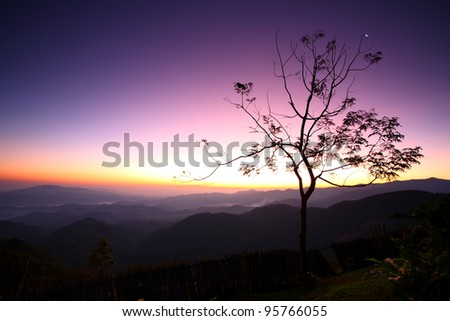 Lone tree on the mountain at sunrise