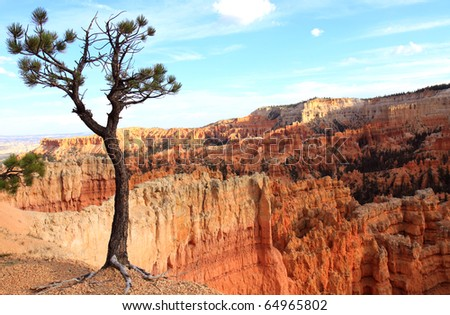 Lone tree overlooking Bryce Canyon with orange sandstone spires and rock formations in valley below