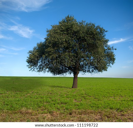 Stock Photo Lone tree, pear field background beautiful sky