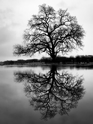 Lone Tree Reflection Lake Side taken in Highland Village Texas