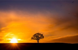 Lone tree silhouette sun set dawn