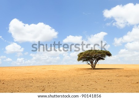 Lonely acacia tree in desert on the cloudy sky background