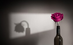 Lonely and Sadness Feeling. Mental Health Disorder in Relationship Concept. Pink Rose Flower Shading Shadow on the Wall. Symbol of  Love and Valentines Day