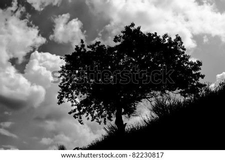 Lonely apricot tree on a hill against cloudy sky - dramatic black and white version.