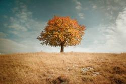 Lonely autumn tree