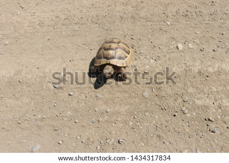 Lonely baby turtle living in nature, Turtle baby turtle in nature. Baby Turtle Crawling on the Ground