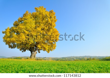Lonely beautiful autumn tree. Autumn Landscape - stock photo