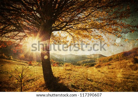 lonely beautiful autumn tree  ...