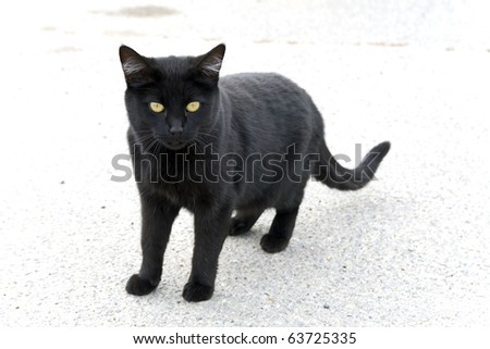Lonely black cat