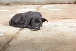 Lonely Black Dog Sleeping on Asphalt Road