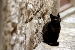Lonely black street cat waiting for some food