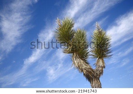 "Lonely cactus against the blue sky in desert ""Valley of Death"" Nevada"