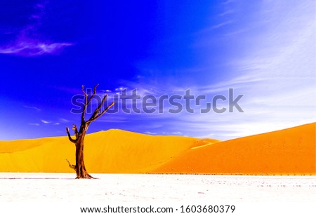Lonely dead dry tree in sand desert. Desert dead dry tree. Desert tree on blue sky clouds background. Desert lonely tree view